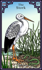 72dpi-17-Stork